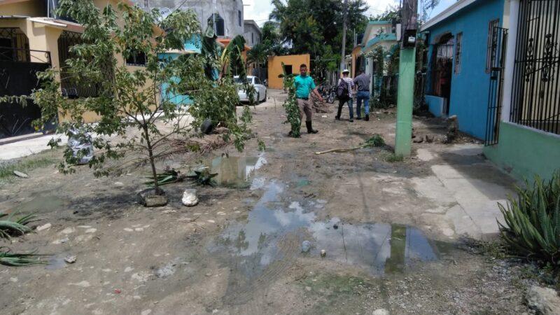 Habitantes siembran matas en las calles en reclamo de sus arreglos en Hato Mayor del Rey