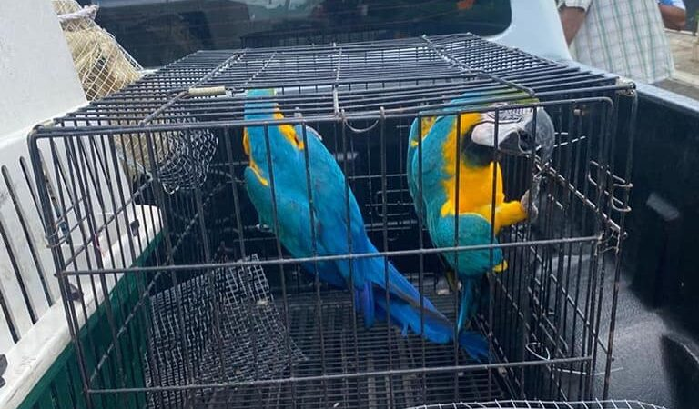 SENPA recuperan 37 especies de animales exóticos en La Altagracia